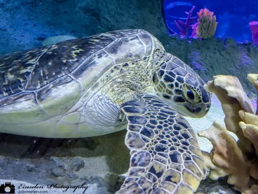 SEA Life Aquarium Orlando Sea Turtle